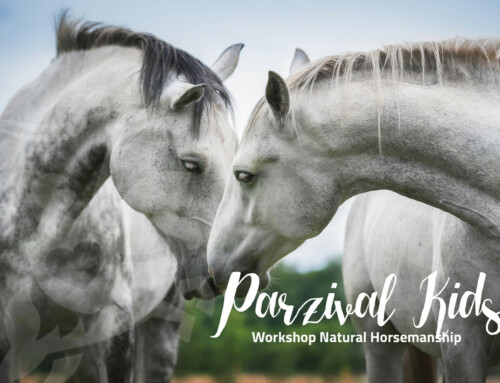 Parzival Kids Workshop Horsemanship